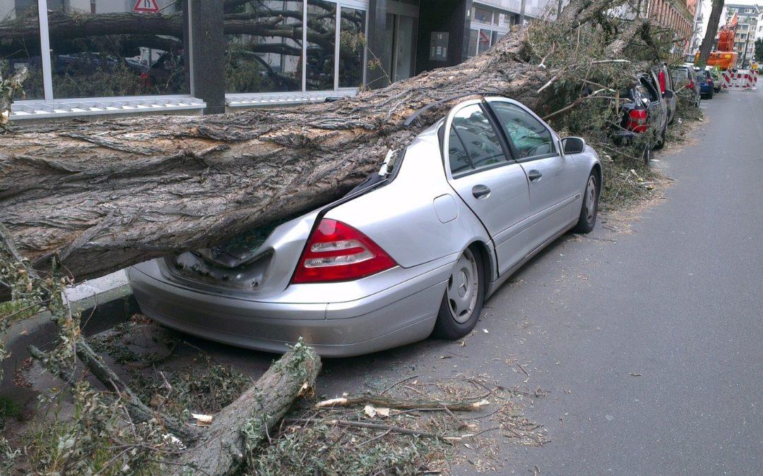 Caída de árbol por fuertes vientos